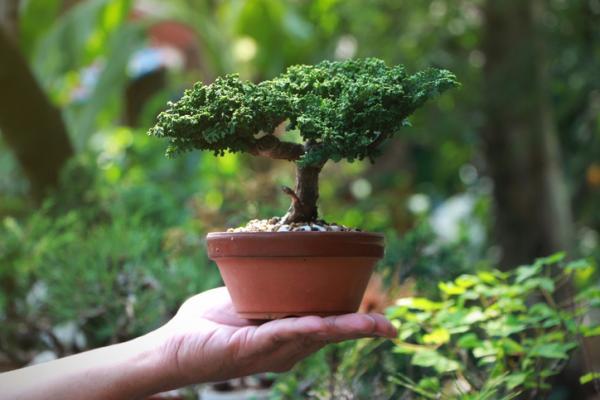 19 types of bonsai - Bonsai Shohin