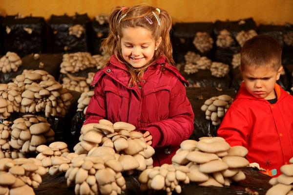 Growing mushrooms at home - Care for growing mushrooms at home: conditions