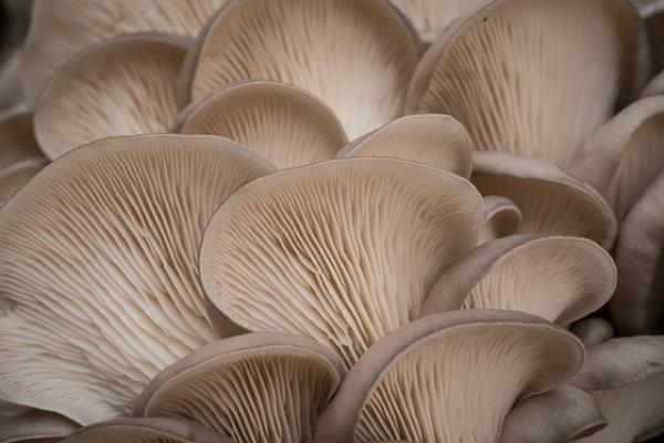 Growing Mushrooms At Home - Names And Types Of Mushrooms To Grow At Home