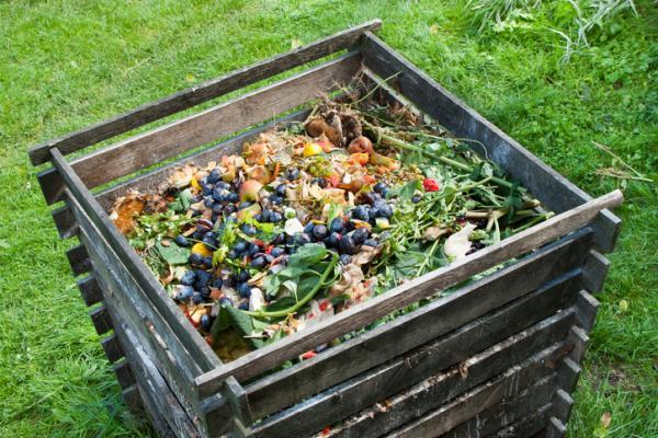 Types of compost - What is compost and what is it for