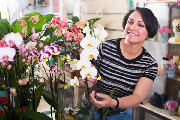 How to prune an orchid - Orchid maintenance - basic care