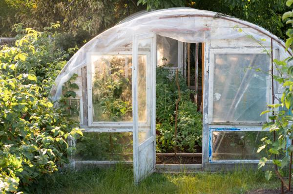 Greenhouse tomato cultivation - Greenhouse tomato cultivation - care guide