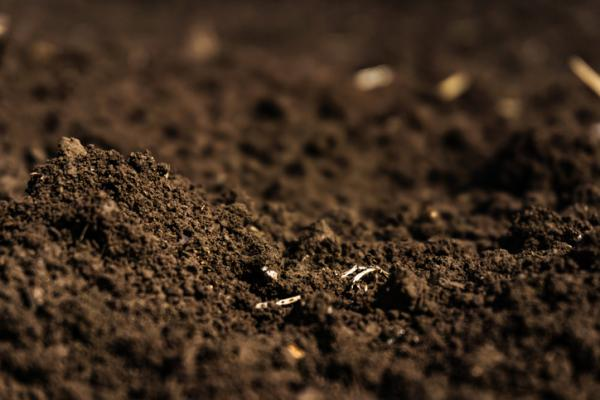 Peat: what is it, types and how to use it - What is peat for plants
