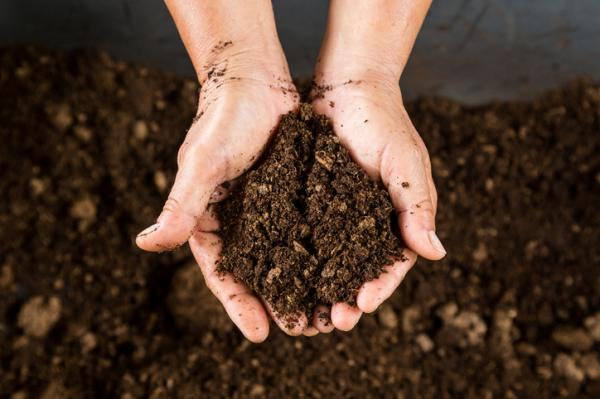 Peat: What It Is, Types And How To Use It - What Plants Need Peat