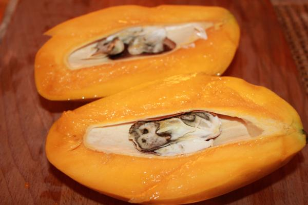 Germinate and plant a mango: how and when to do it - How to germinate a mango