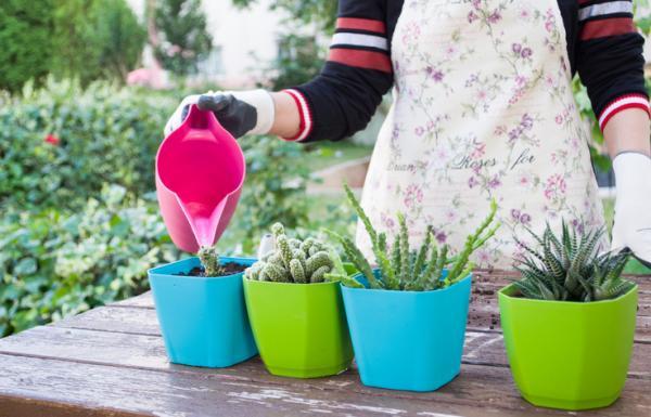 When to water plants - When to water plants - basic guide