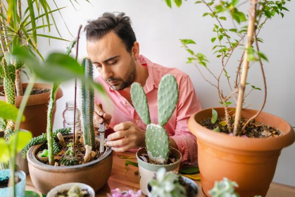 How to clean the leaves of plants - How to clean cactus and succulents