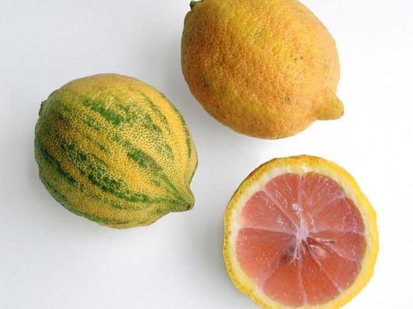 Types of lemon trees - Variegated Pink