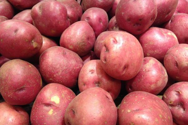 Types of Potatoes - Red Pontiac Potato