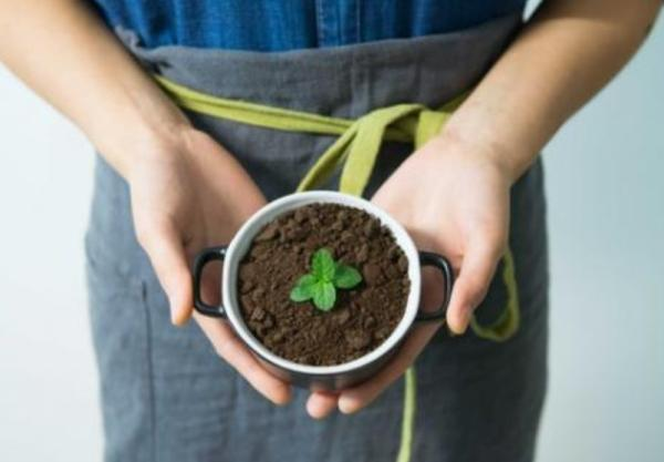 How To Plant Mint - How To Plant Mint By Cuttings And Reproduce It
