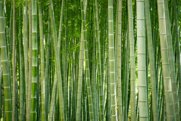 How to care for a bamboo - Location for bamboo