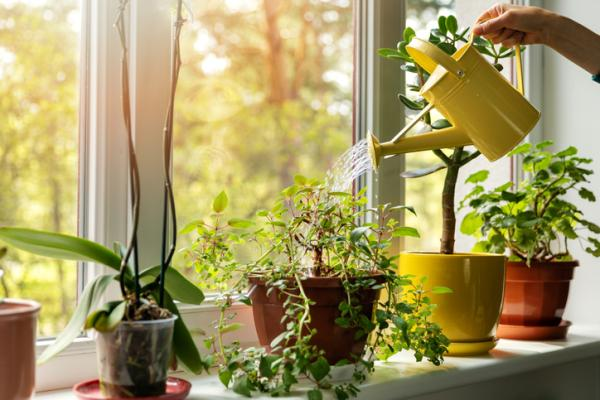 How To Care For Indoor Plants - How To Water Indoor Plants