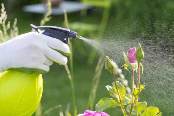 How to remove mosquitoes on plants - How to remove mosquitoes on plants