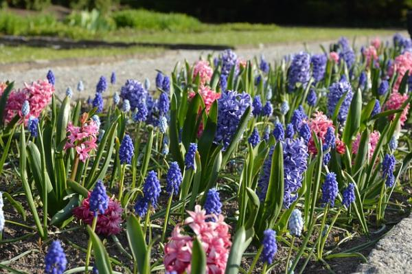 15 Bulb Plants - Other Easy-Growing Bulbous Plants