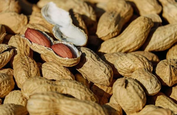 Types of Legumes - Peanuts