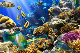 Coral colony and coral fish - 34734039