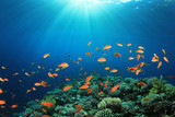 Coral Reef Scene with Tropical Fish - 37719481