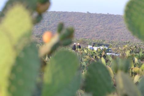 cactus_fruit1_320763932 منظمة الزراعة والأغذية توصي المغرب بتطوير نبتة التين الشوكي فلاحة