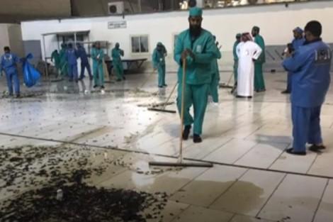 الصراصير تهاجم الحرم وسلطات مكة تتدخل