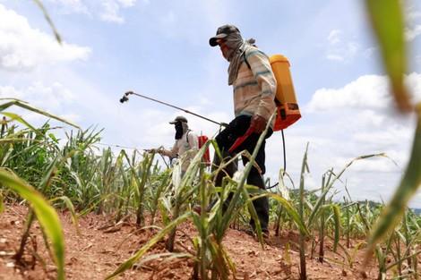 "Export_agricultural_chemicals_988490919 تقرير: بلدان أوروبية تُصدر مُبيدات ""محظورة وضارة"" إلى المغرب فلاحة"