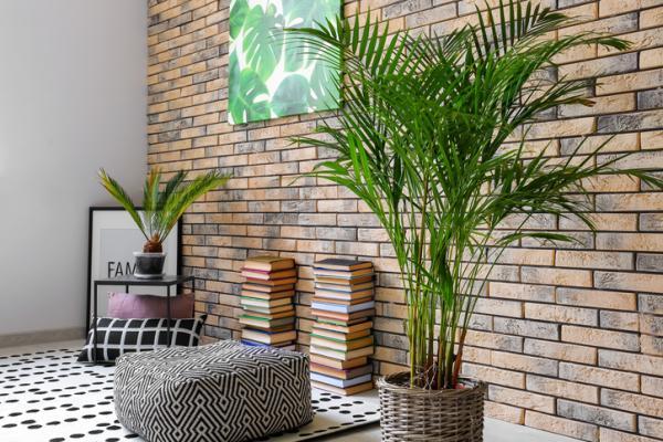 Areca palm tree: care - Fertilizer for the areca palm tree