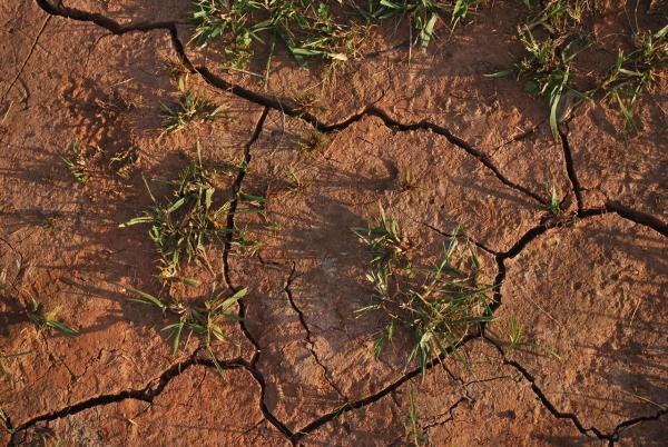 Qué es la erosión del suelo sus causas y consecuencias - Consecuencias del deterioro del suelo