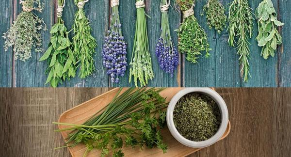 How To Grow Herbs At Home - How Much Light Do They Need?