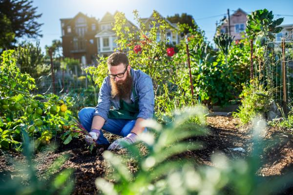 What to plant in an urban garden - What to plant in an urban garden - plant list