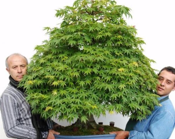 19 types of bonsai - Bonsai Omono