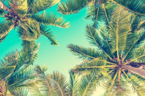 Types of palm trees - Cocos nucifera