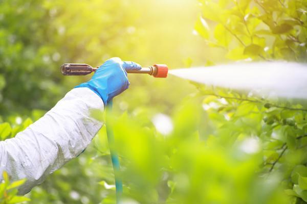 Homemade insecticides for lemon trees - Neem oil