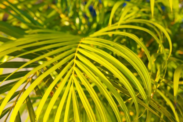 Moisture Absorbing Plants - Bamboo Palm