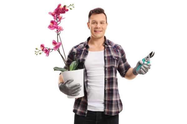 How to Prune an Orchid - When to Prune an Orchid