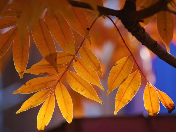 Differences Between Evergreens And Deciduous Plants - What Are Deciduous Plants