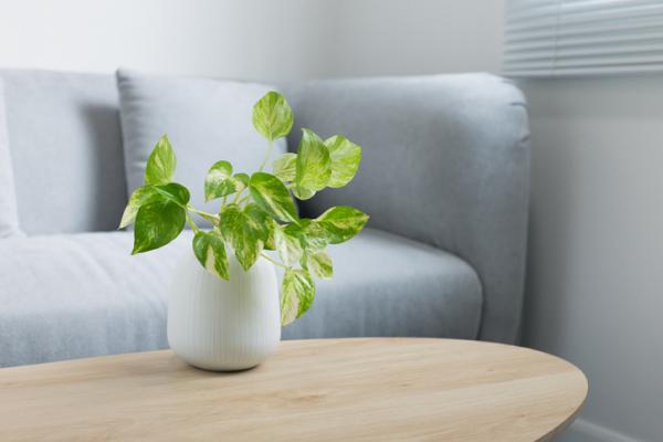 Plants that absorb heat - Poto
