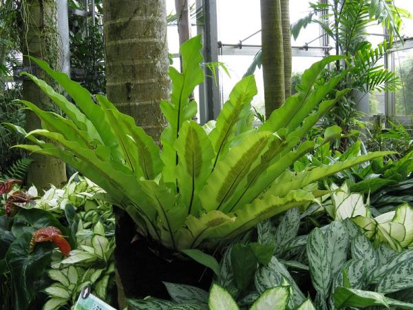Growing and caring for ferns - Growing and caring for ferns