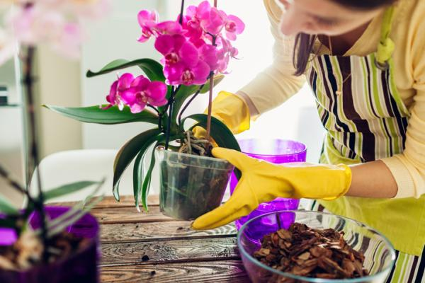 How to care for orchids - Pots for orchids