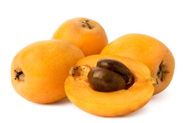 Planting loquats: when and how to do it - When to plant loquats