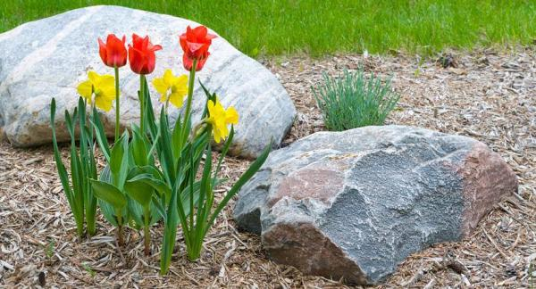 Turn a garden into a biodiversity paradise - Create shelters under the stones