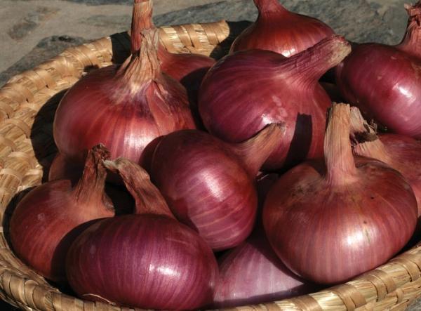Onion types - Ptujski Lük, one of the lesser known types of onions