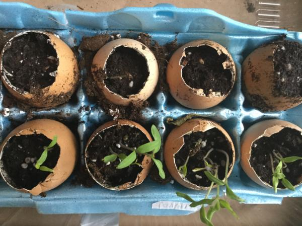 How to make a seedbed - How to make a seedbed step by step with recycled materials