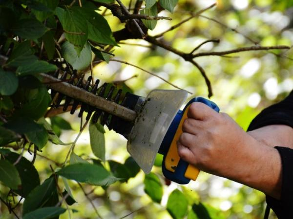 Cómo y cuándo podar árboles frutales - Cuándo se hace la poda de los árboles frutales