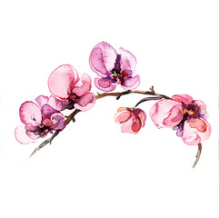 illustration the watercolor flowers orchid isolated on the white