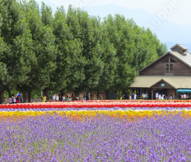 Furano Hokkaido Japan July 30 2015 Lavender And Colorful Flower Fields
