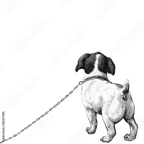 Jack Russel Kleiner Hund Welpe Hündchen Lithographie