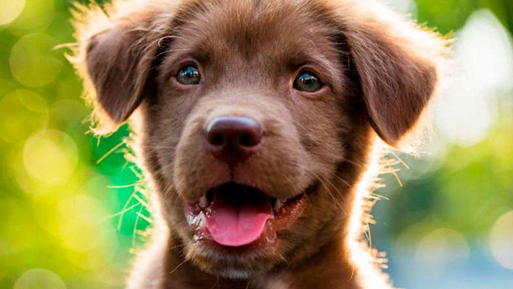 Los mejores Smart Feeder para mascotas