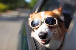 Kia Pets Accesorios