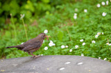 Ein Vogel mit dem Frühstück