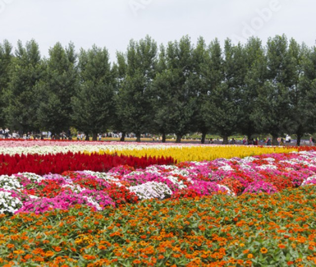 Furano Hokkaido Japan July 30 2015 Colorful Flower Fields With Pine