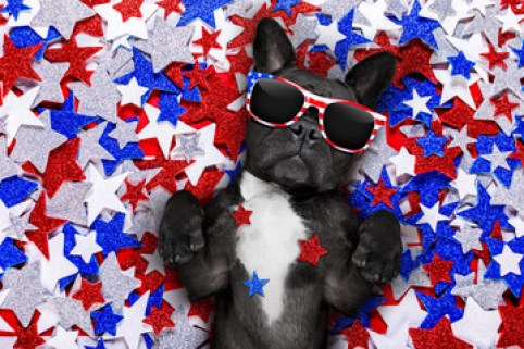Image result for fourth of july dogs partying